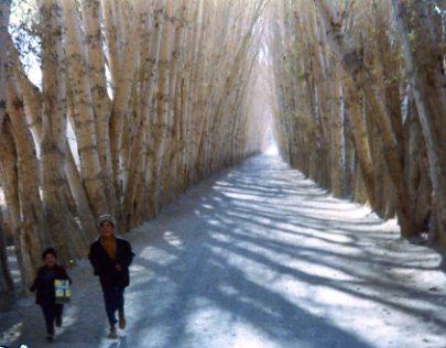 bamiyan171